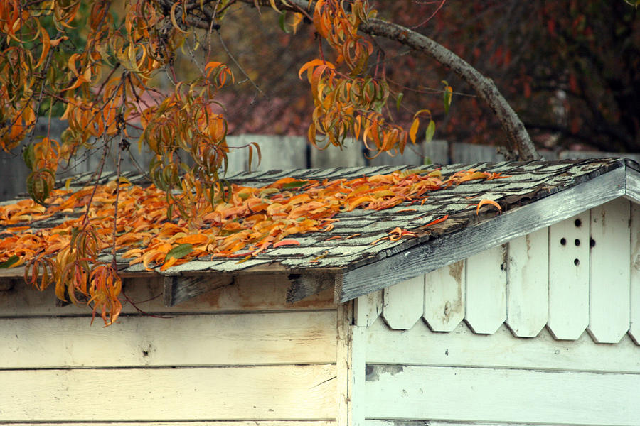 Season Photograph - Leaf Shed by Holly Ethan