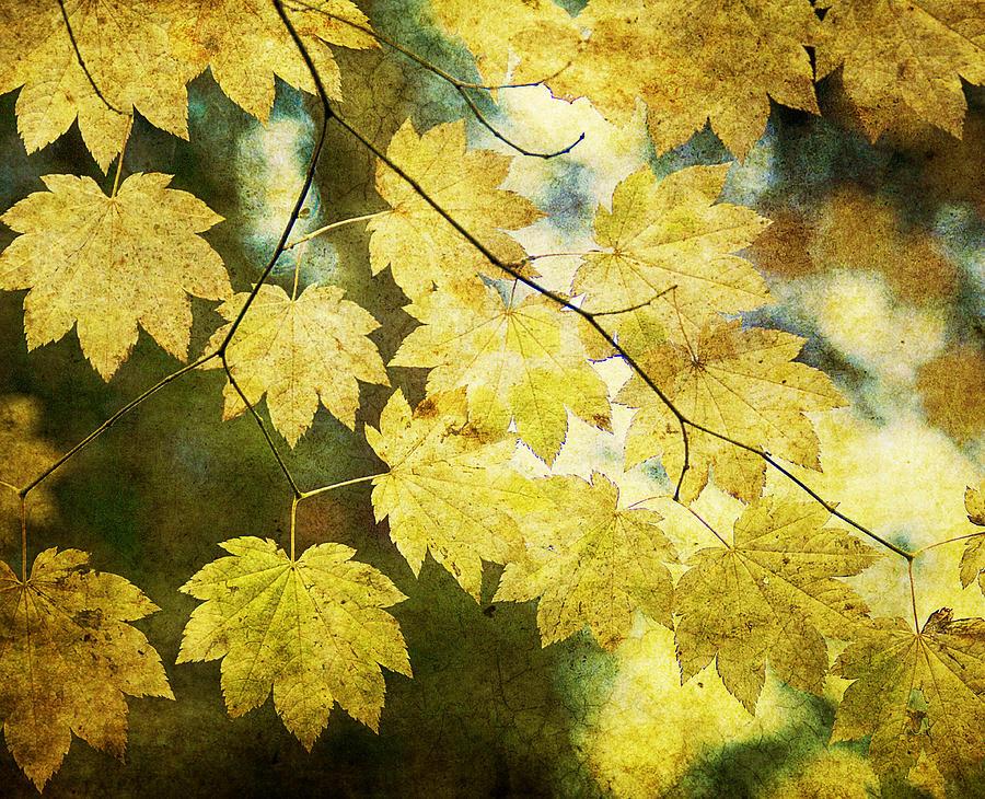 Leaf Photograph - Leaf Zen T by Rebecca Cozart