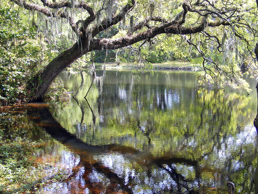 Pond Photograph - Lean On Me At The Birthplace Of America by Elena Tudor