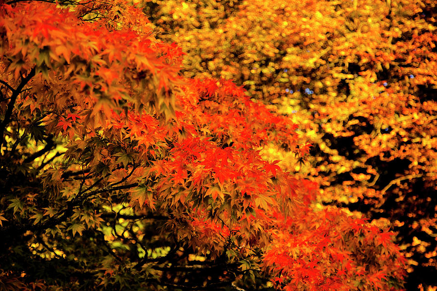 Leaves On Fire Photograph