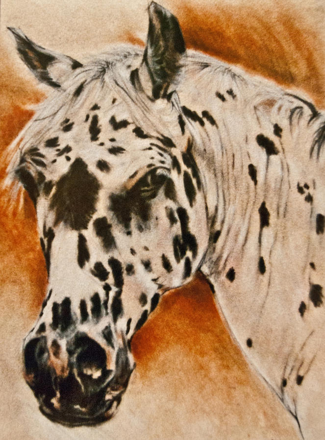 Horse Art Painting - Leopard Appy by Jani Freimann