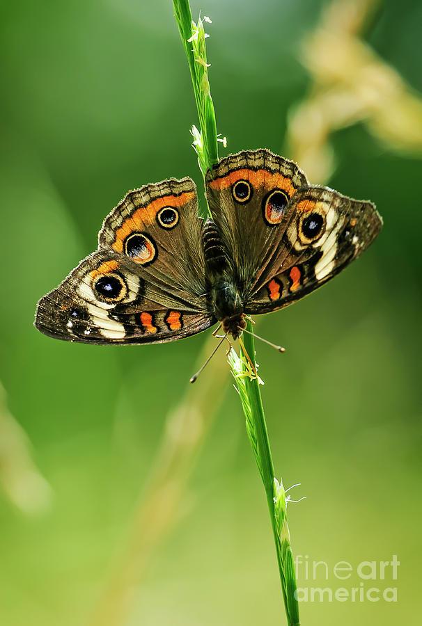 Art Photograph - Lepidoptera by Charles Dobbs