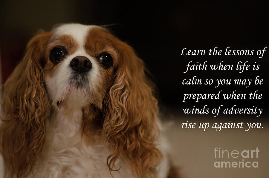 Lessons Of Faith Photograph