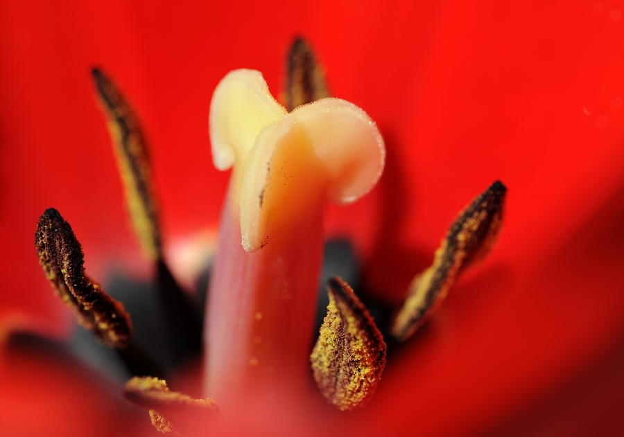 Flower Photograph - Life Center by Catherine Lau
