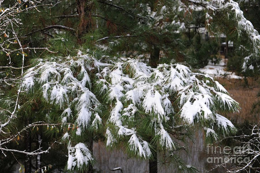 Light Dusting Of Snow Photograph