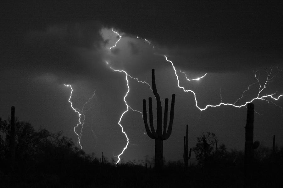 Saguaro Photograph - Lightning Storm Saguaro Fine Art Bw Photography by James BO  Insogna