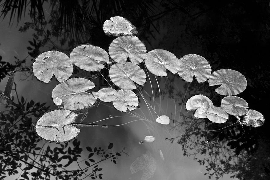 Lilly Pads Photograph - Lilly Pads Fakahtchee Strand by Jim Dohms