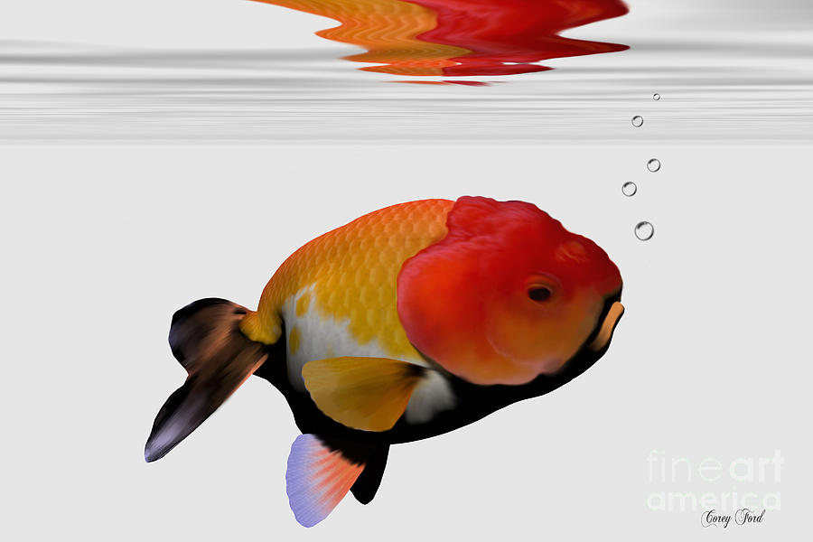Lion-head Goldfish Painting - Lion-head Goldfish by Corey Ford