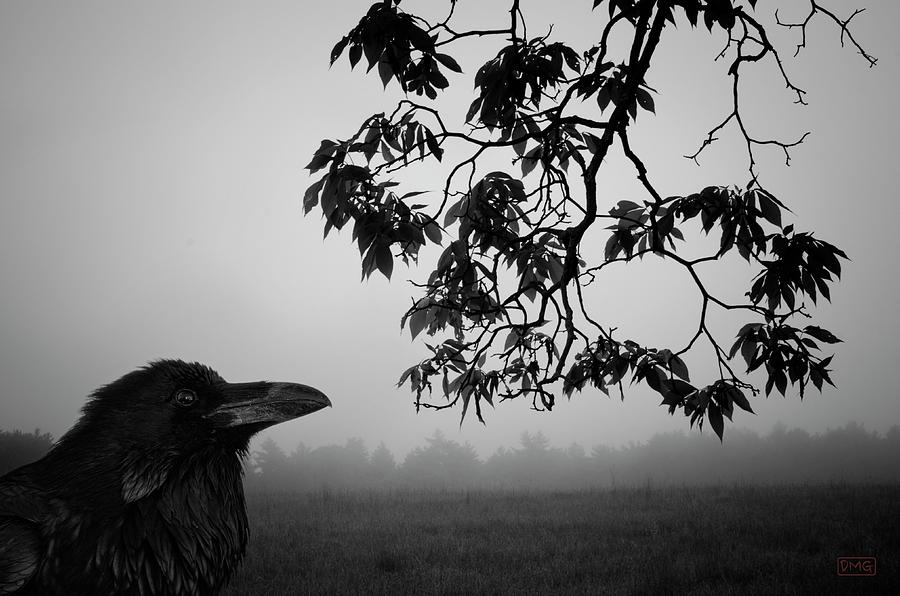 Raven Photograph - Listening To The Leaves by Dave Gordon