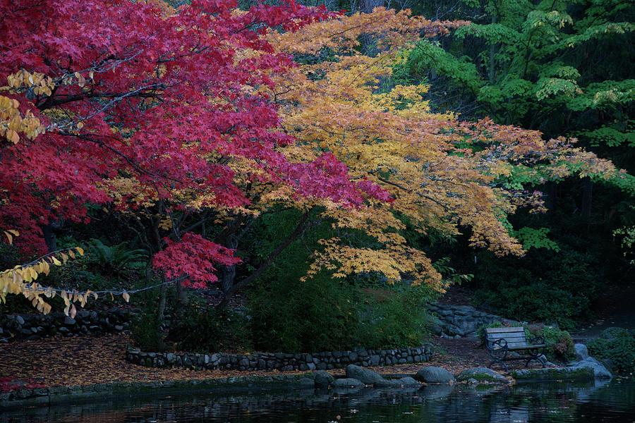 Litha Park Ashland Oregon Photograph