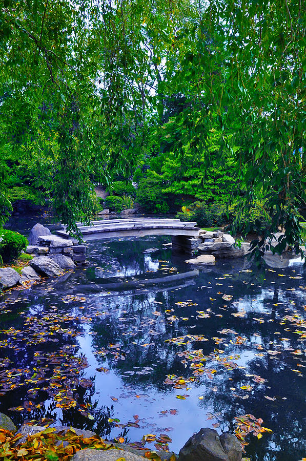Bridge Photograph - Little Bridge - Japanese Garden by Bill Cannon