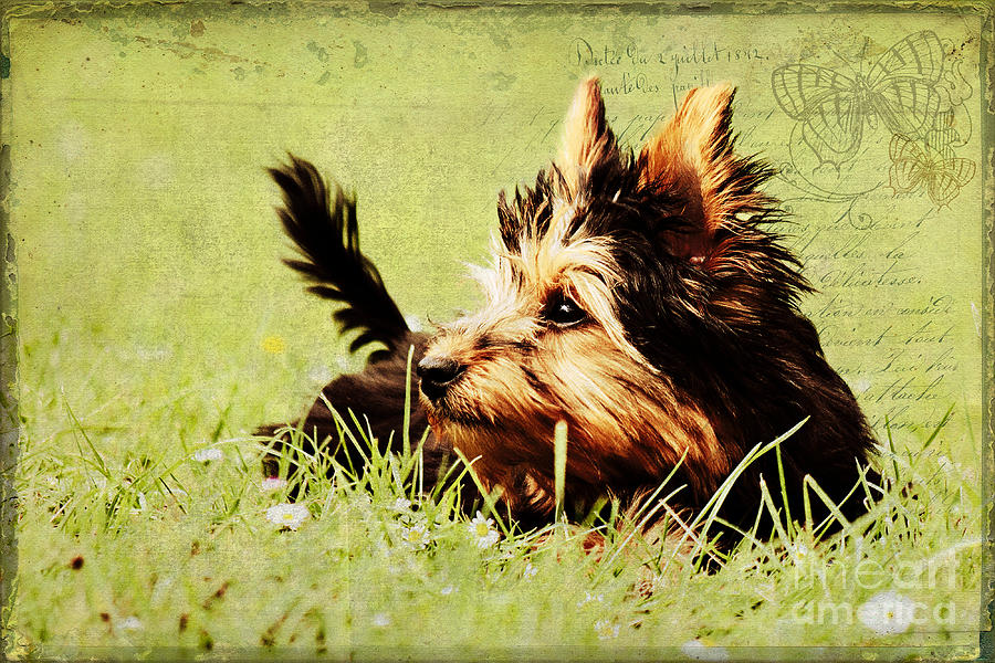 Dog Photograph - Little Dog by Angela Doelling AD DESIGN Photo and PhotoArt