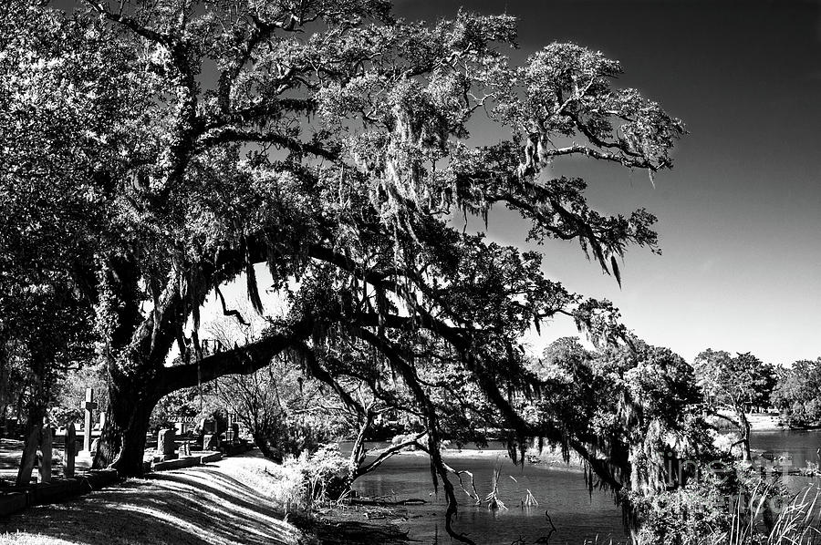 Live Oak Tree Dripping With Spanish Moss Stretching To The Water Photograph