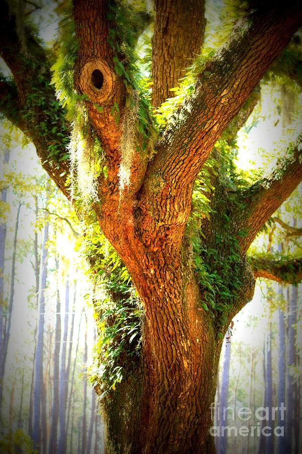 Live Oak With Cypress Beyond Photograph