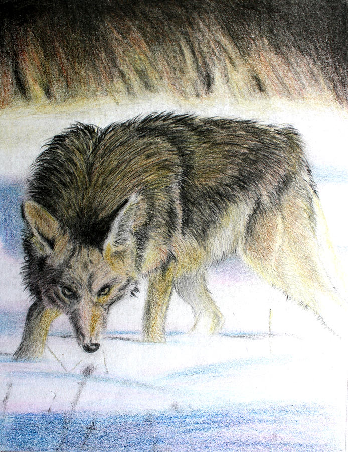 Animal Art Drawing - Logan by Ted Castor