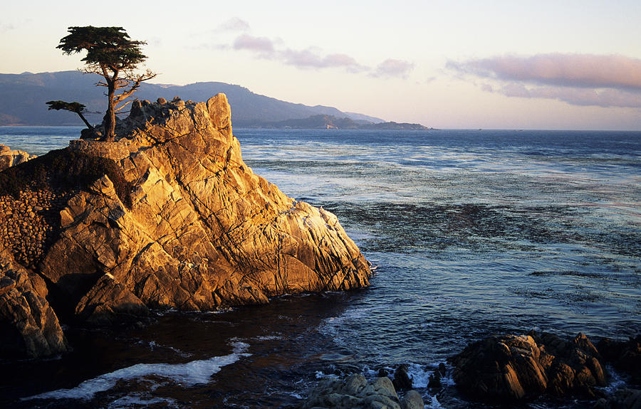 Afternoon Photograph - Lone Cypress Tree by Michael Howell - Printscapes