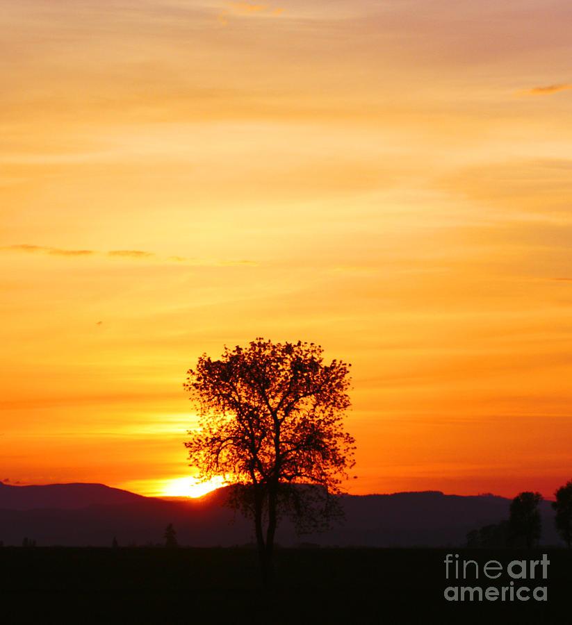 Tree Photograph - Lone Tree Sunset by Nick Gustafson