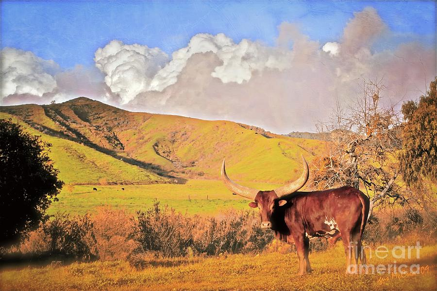 Ranch Photograph - lonesome Longhorn by Gus McCrea