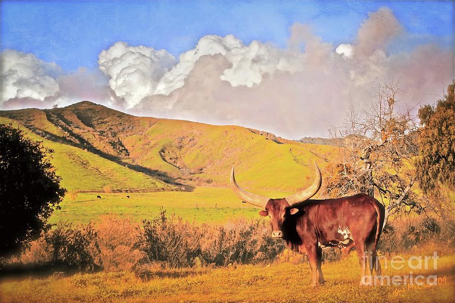 Ranch Photograph - Lonesome Longhorn Ojai California by Gus McCrea