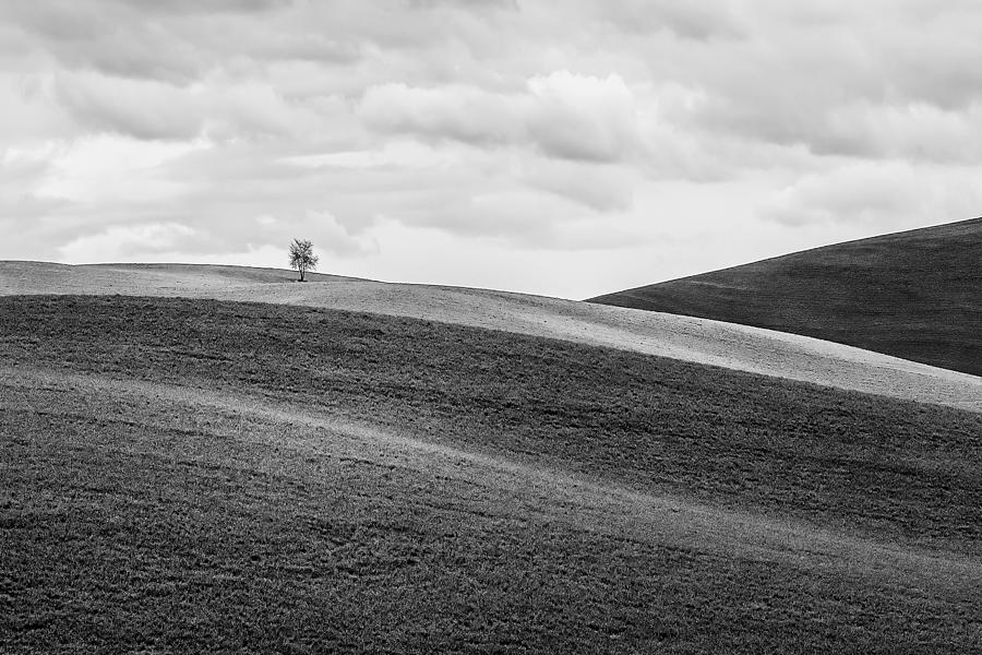 Tree Photograph - Lonesome by Ryan Manuel