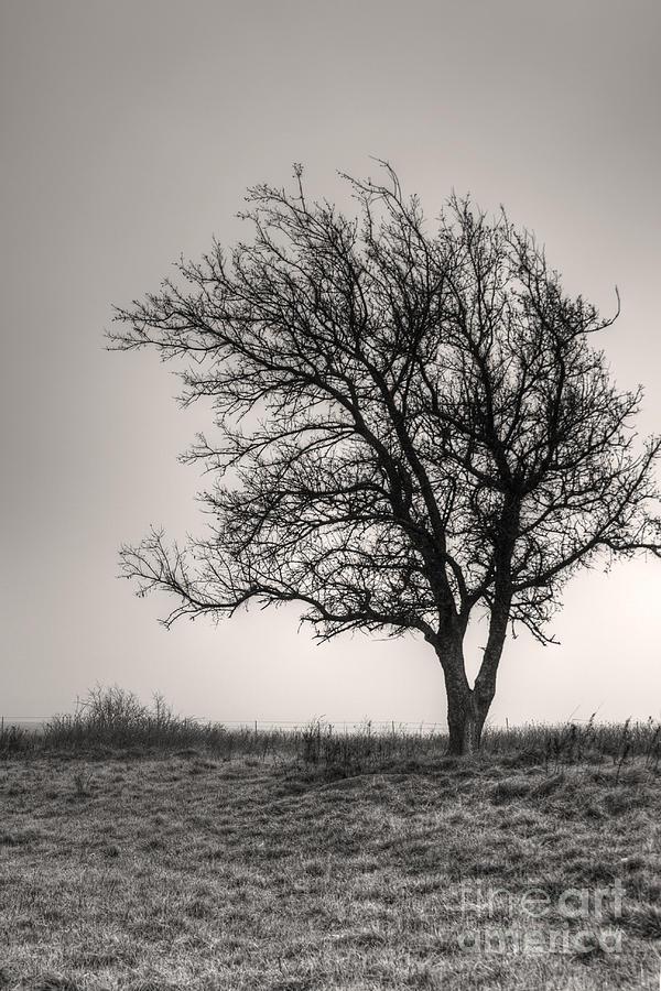 Lonesome Tree Photograph
