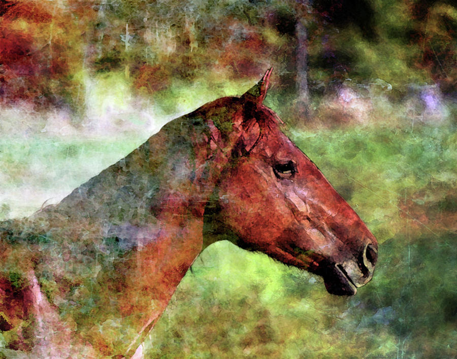 Lost Digital Watercolor Horse Portrait 475 Lw_2 Photograph