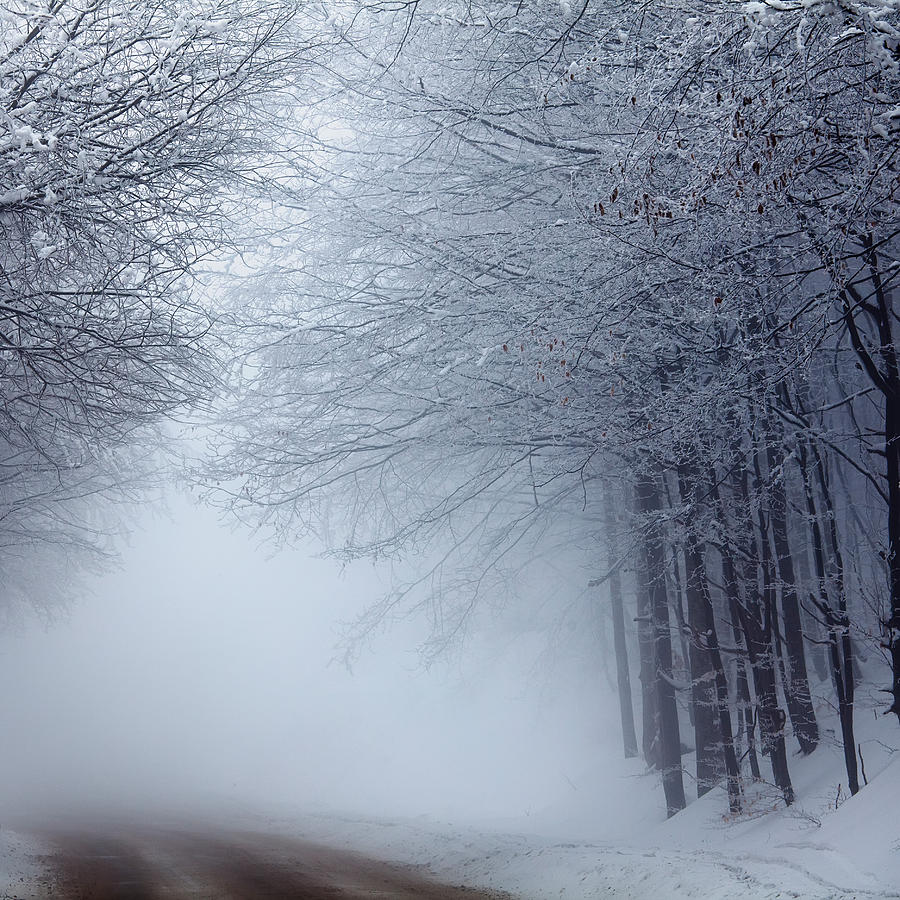 Fog Photograph - Lost Way by Evgeni Dinev