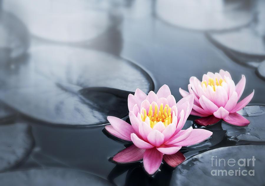 Blossoms Photograph - Lotus Blossoms by Elena Elisseeva