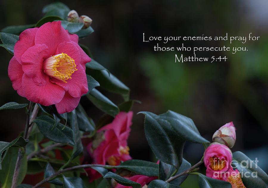 Love Your Enemies Photograph