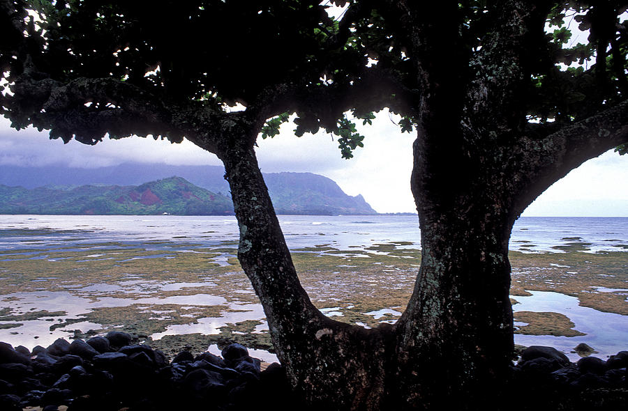 Kauai Photos Photograph - Low Tide And The Tree by Kathy Yates