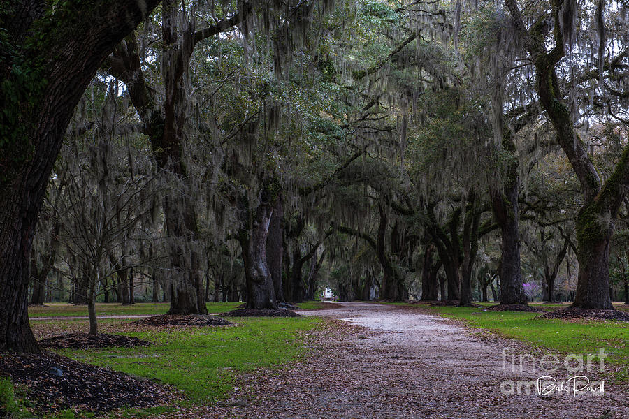 Lowcountry Dirt Road Destination Photograph
