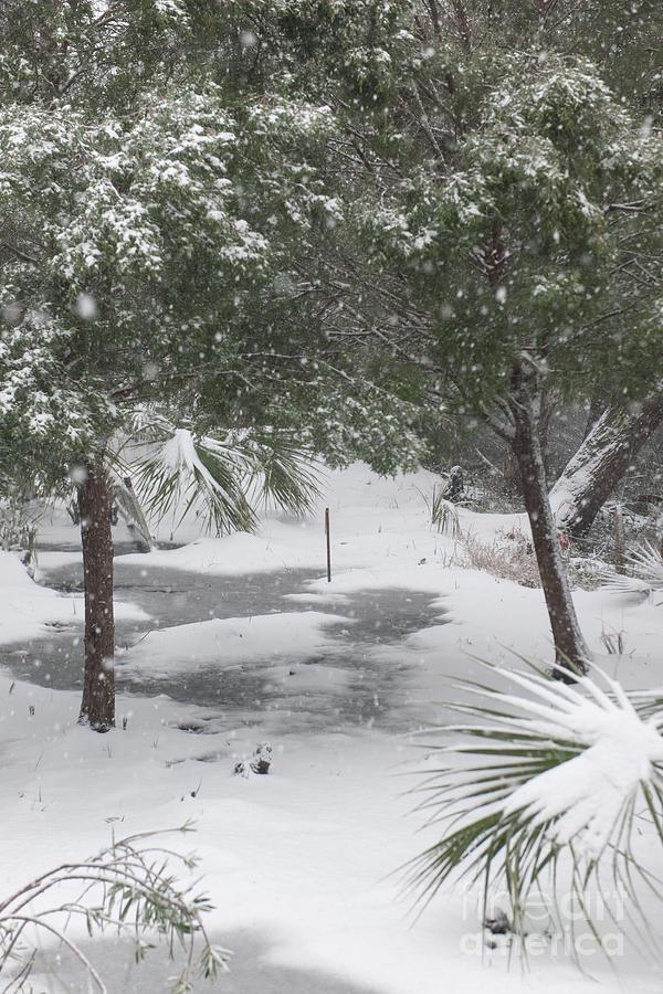 Lowcountry Winter Wonderland Photograph