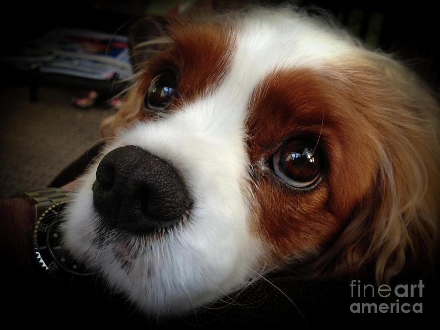 Loyal Pup And Sweet Face Photograph