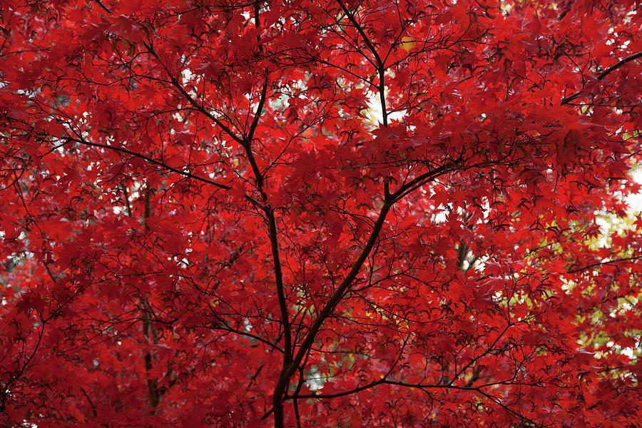 Lytha Park Oregon Photograph