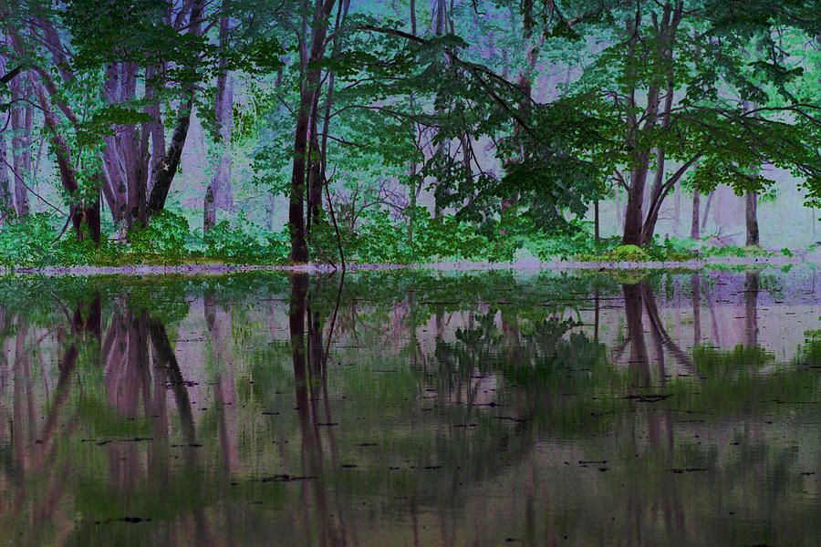 Forest Photograph - Magical Forest by Karol Livote