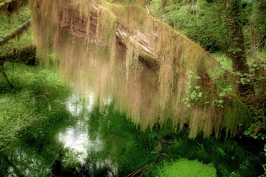 Rainforest Photograph - Magical Hall Of Mosses - Hoh Rain Forest Olympic National Park Wa Usa by Christine Till