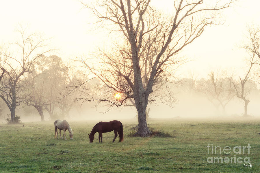 Morning Photograph - Magical Morning by Scott Pellegrin