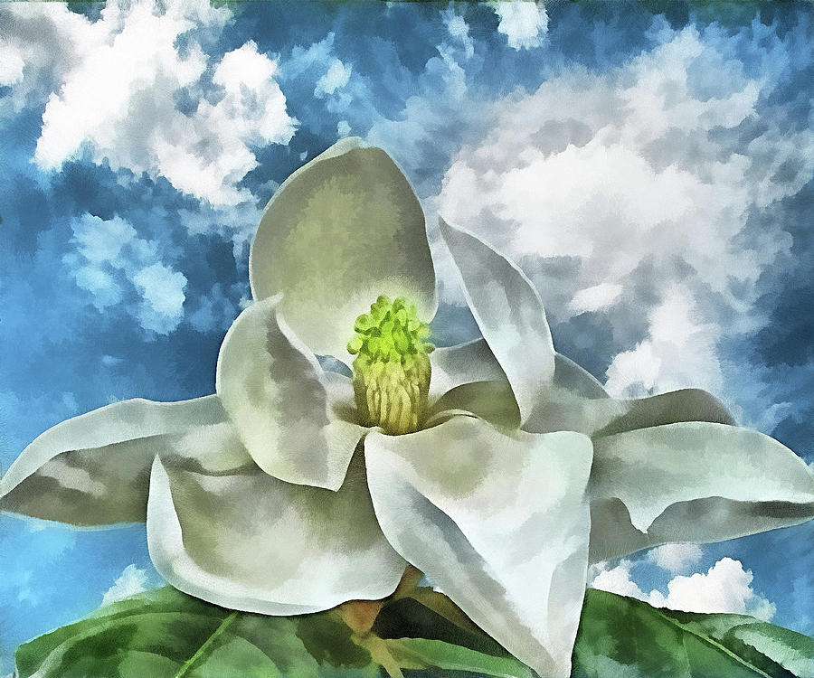 Magnolia Digital Art - Magnolia Dreams by Wendy J St Christopher