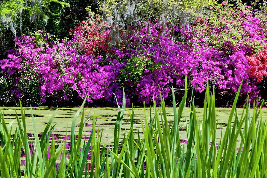 Flowers Photograph - Magnolia Plantation Pond by Drew Castelhano