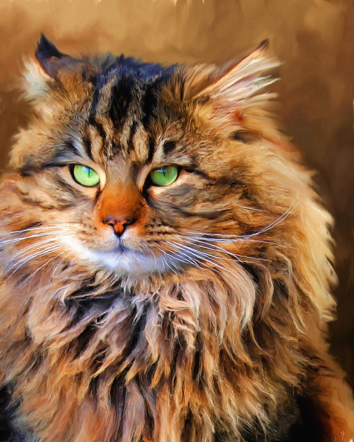 Maine Coon Painting - Maine Coon Cat by Jai Johnson
