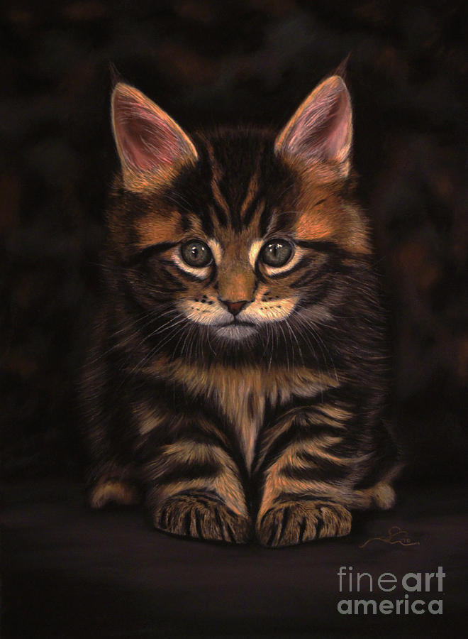 Cat Photograph - Maine Coon Kitty by Sabine Lackner