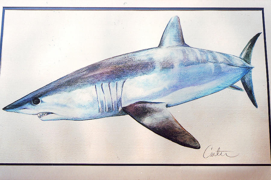 Mako Shark by C...
