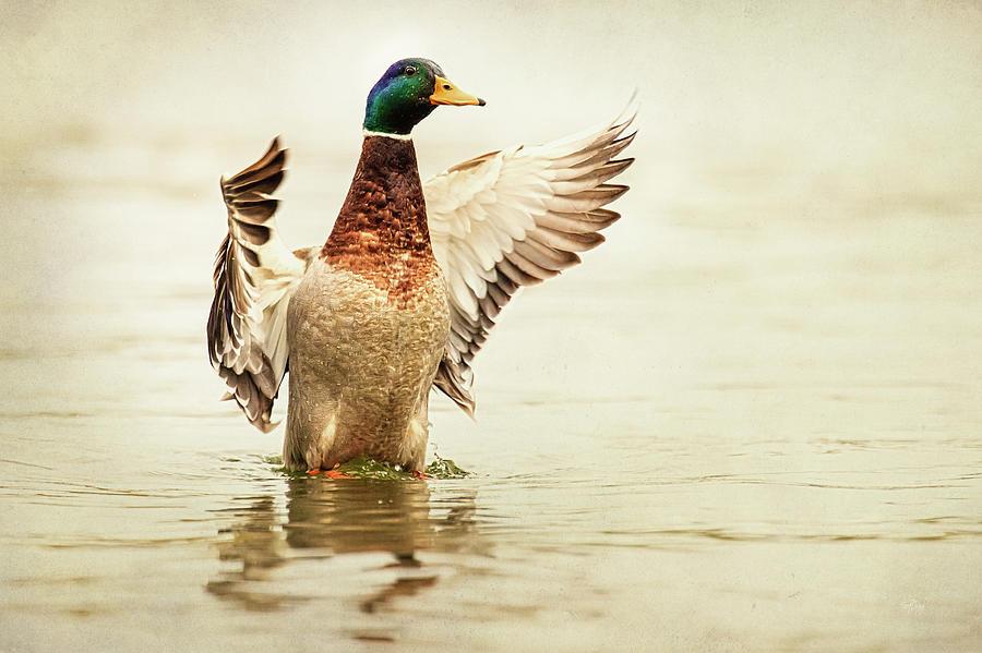 Duck Photograph - Mallard by Everet Regal