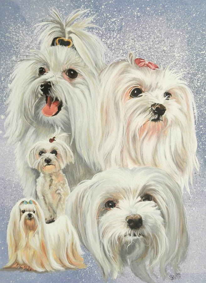 Dog Painting - Maltese Collage by Barbara Keith