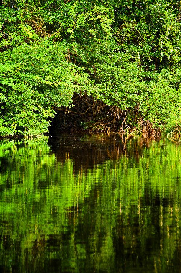 Mangrove Photograph - Mangrove Tunnel by Sarita Rampersad