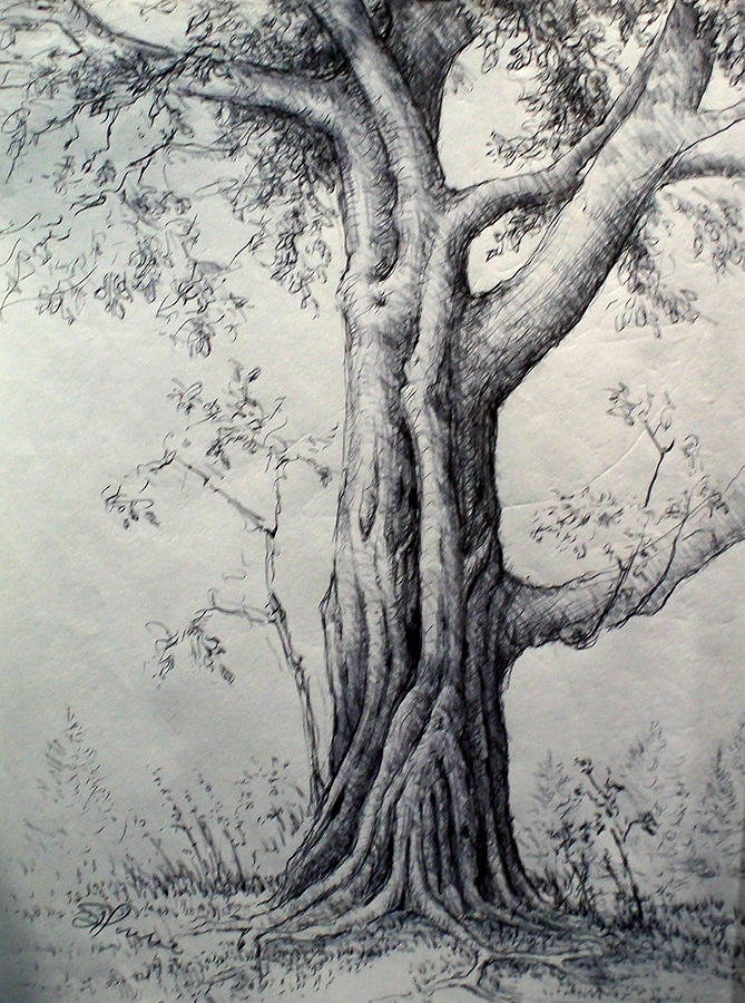 Maple Tree Drawing by Georges St Pierre