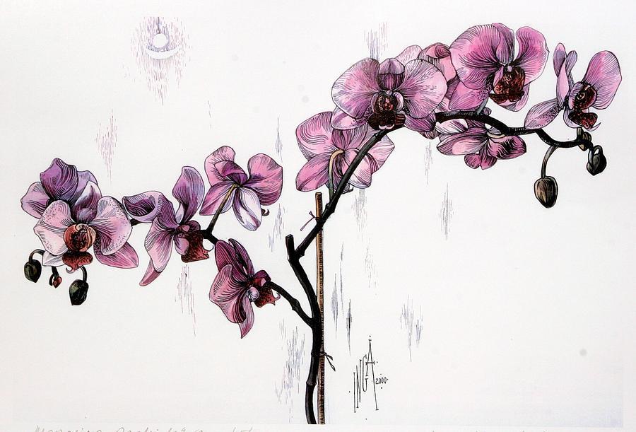 орхидеи рисунок красками