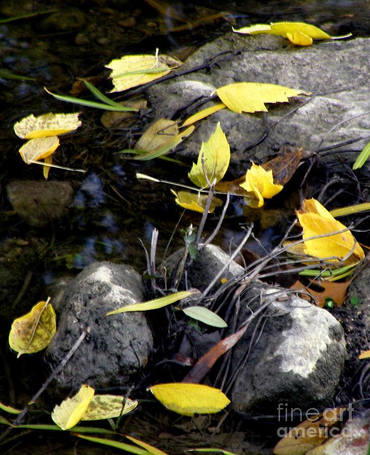 Leaves Photograph - Marooned by Joe Jake Pratt