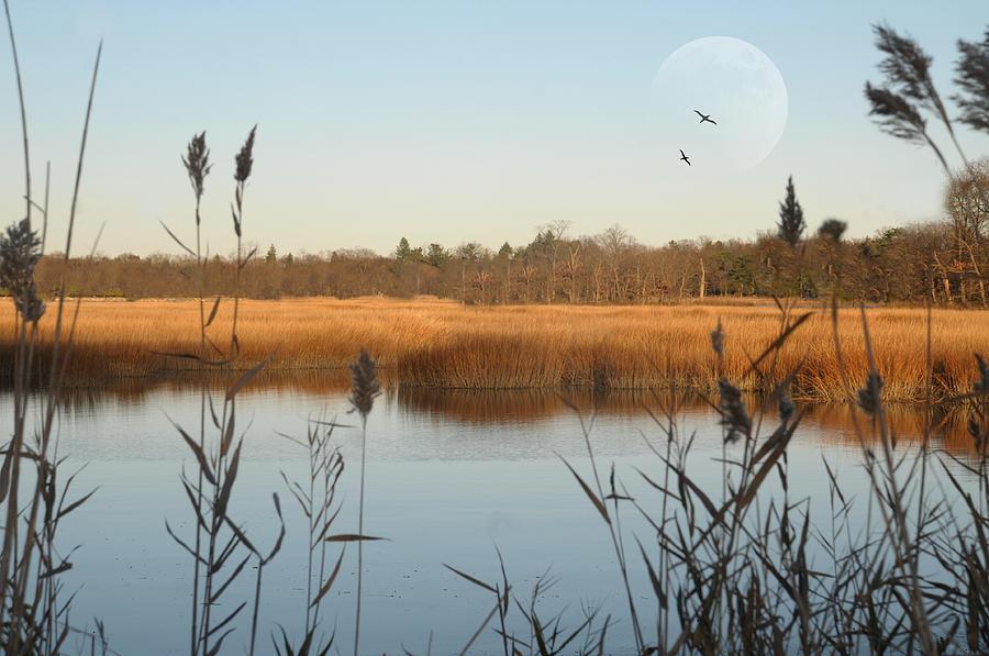 Horizontal Photograph - Marshland by Diana Lee Angstadt
