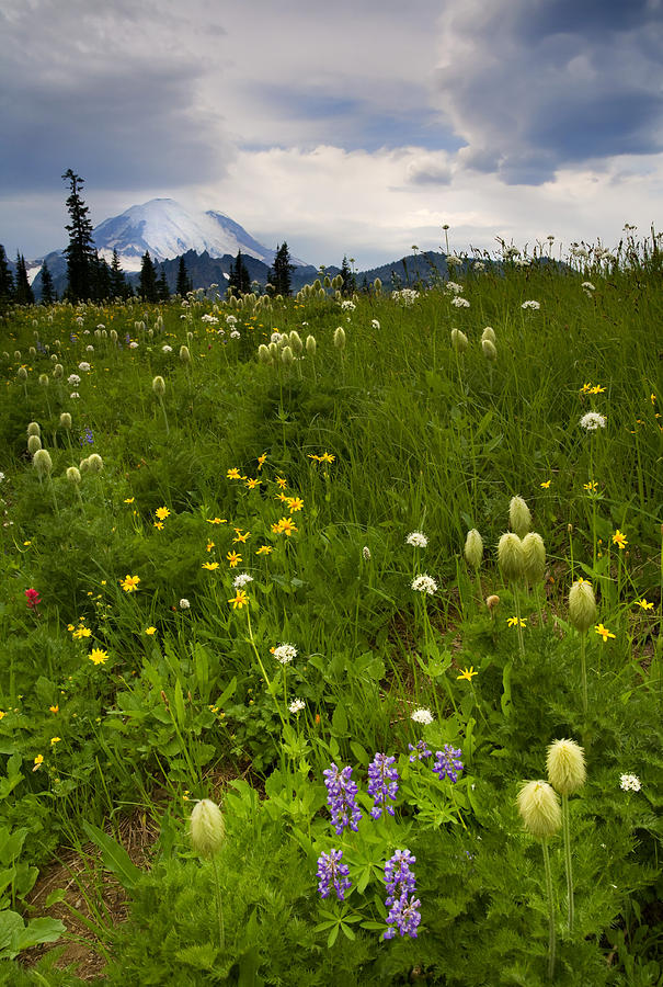 Rainier Photograph - Meadow Beneath The Storm by Mike  Dawson